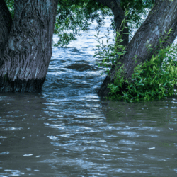 Flood and Power Outage Safety Guide