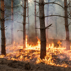 How to prepare for the 2021 wildfire season